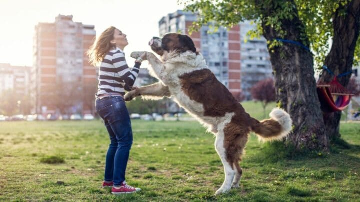5 Reasons Why My Dog Like to Stand on Me