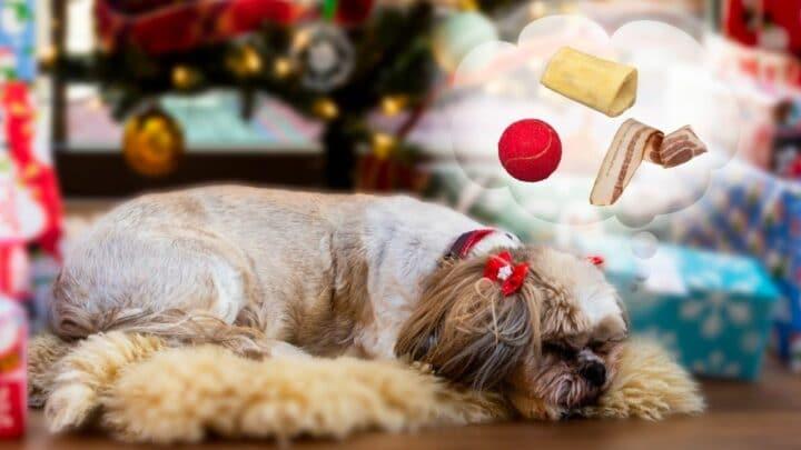 Why Do Dogs Bark in Their Sleep? Hmm..