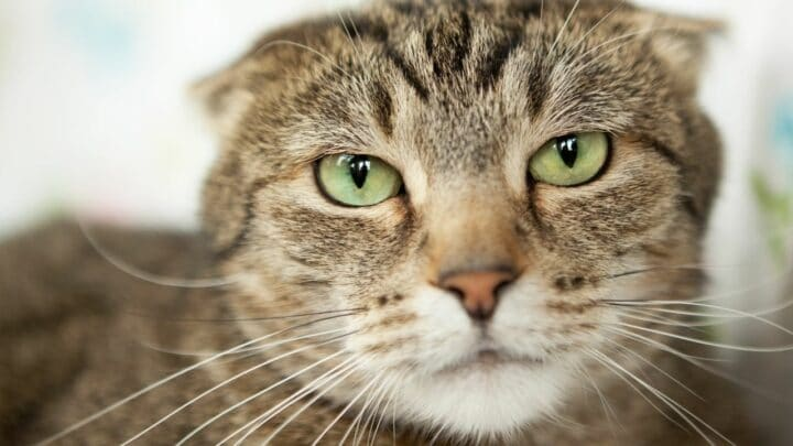Why Do Cats Hate Singing? Oh, That's Why!
