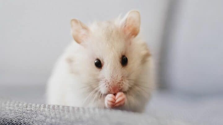 How To Tell If  A Mouse Is Dying? Oh No!