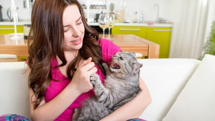 Why do Cats Bite your Hair? Stop It!