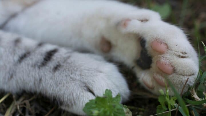 Why Do Cats Fold Their Paws? Now That's Interesting!