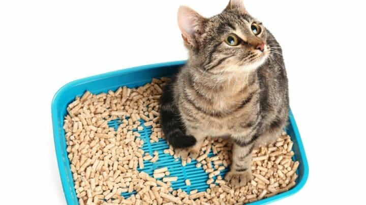 Why Do Cats Lay In Their Litter Box? Oh! That's Why!