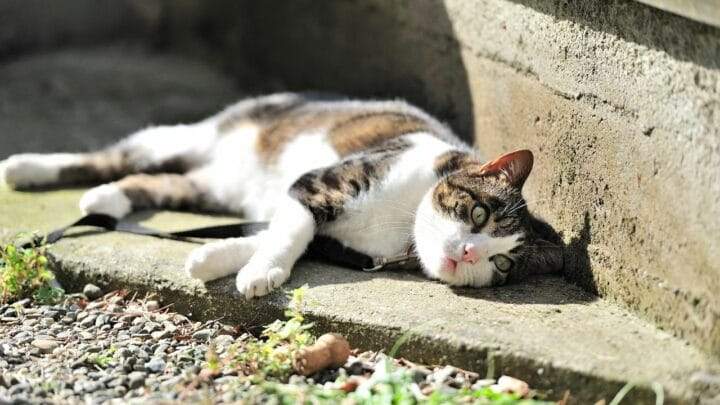 Why Do Cats Lay in the Sun? Aha!