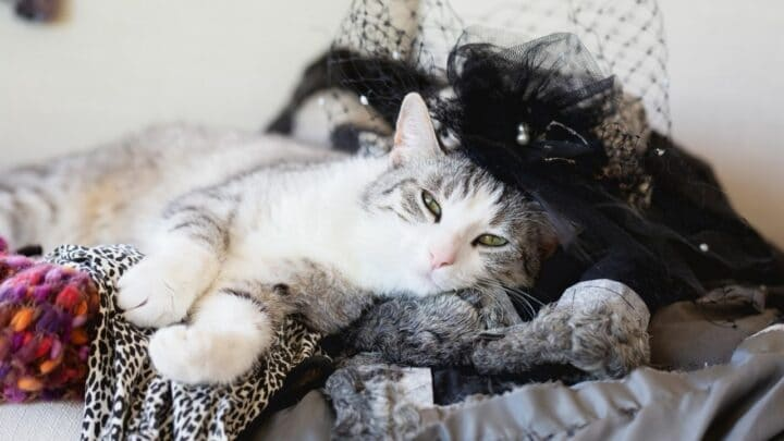 Why Do Cats Lay on Your Clothes? 3 Fun Reasons