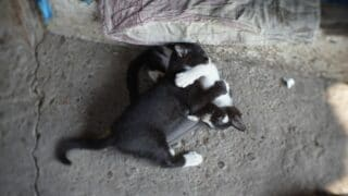 Cats Biting Each Other