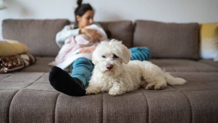 Will An Untrained Dog Protect Its Owner? Let's See!
