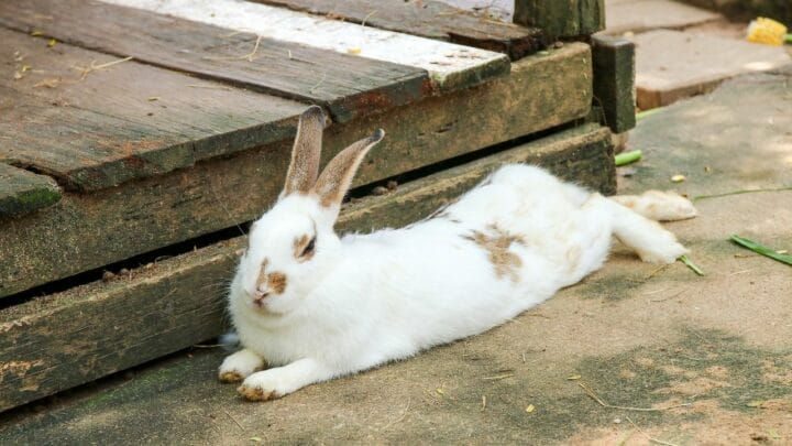 Why Do Rabbits Thump? Tell Me, Please?