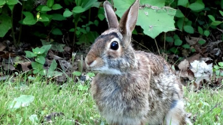 How Smart Are Rabbits? Hmmm…