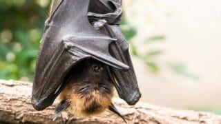 Bats Sleeping Upside Down