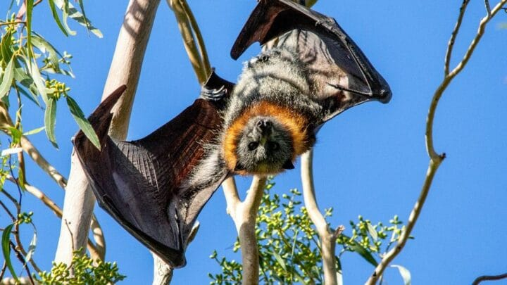 How do Bats See? Cool!
