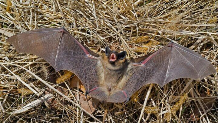 What Do Bats Sound Like? Amazing!
