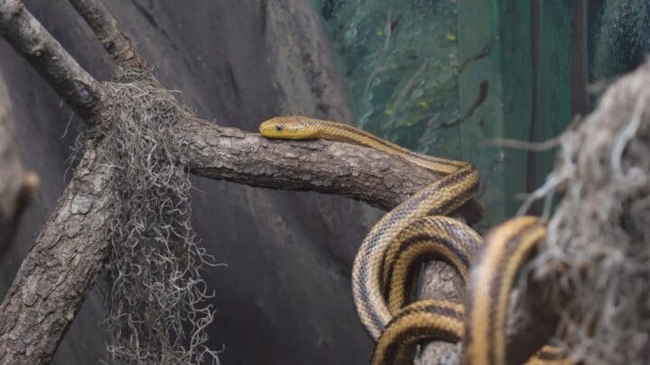 How do Snakes Move? That is a Good One!