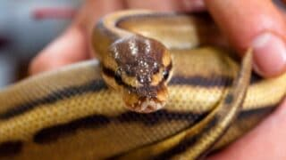 How Do Snakes Poop