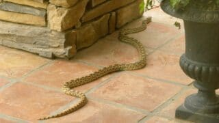 How Fast Are Snakes