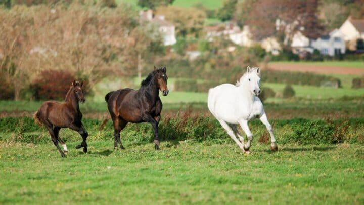 How Fast Can Horses Run? Ooh, So Fast!