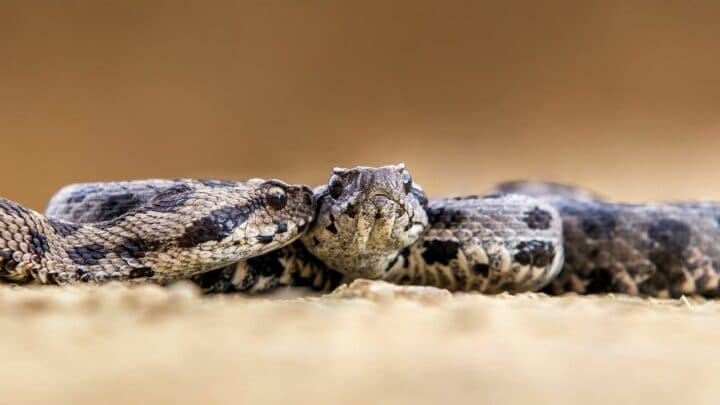 How Intelligent are Snakes? Would Have Never Known!