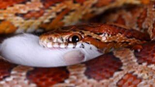 How Often Snakes Eat