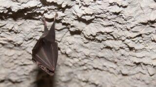 How and Where Bats Sleep