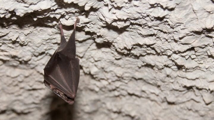 How and Where do Bats Sleep? Let Us See!
