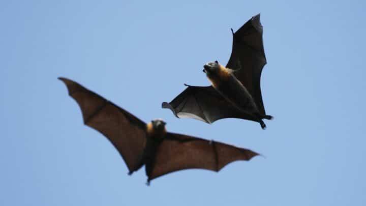 How Do Bats Fly? Ooh!