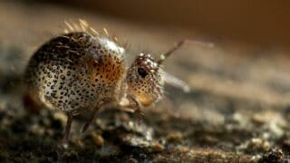 How to Culture Springtails