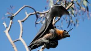 When Do Bats Have Babies