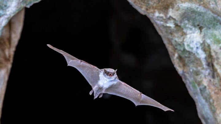 What Time Do Bats Leave and Return to the Roost? Ooh, I Know!