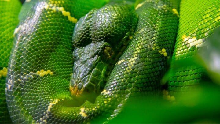 When Do Snakes Hibernate? Ooh, Let Me Prepare For It!