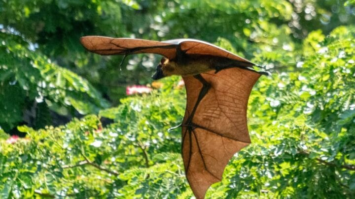 Where do Bats Go during the Day? Let's See!