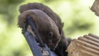 Where Bats Live