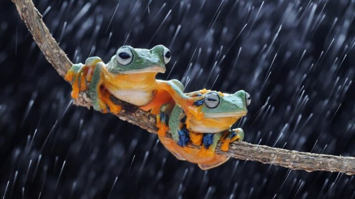 Animal Eating Frogs — 9 Frog-Loving Creatures