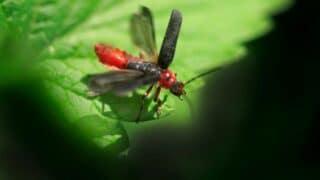 Cute Bugs, Insects, Arachnids, etc.