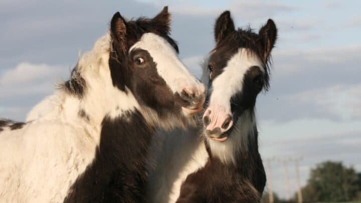 The 10 Cutest Horse Breeds You'll Ever See!