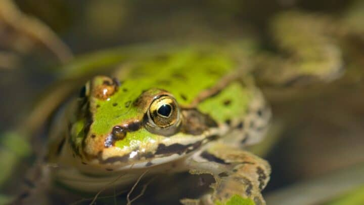 How Frogs Drink Water — Ooh!f