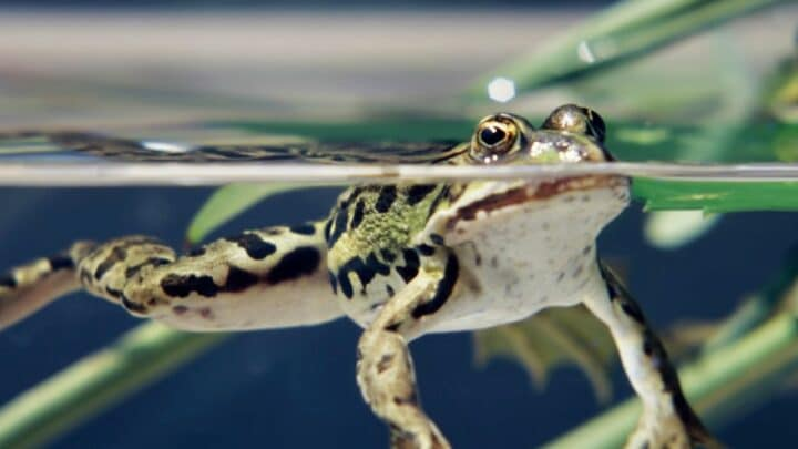How Long Frogs Hold Their Breath — Let's See!