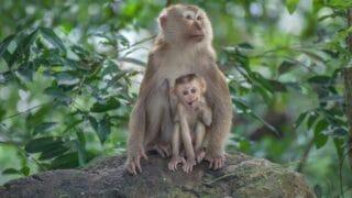 How Long Monkeys Live