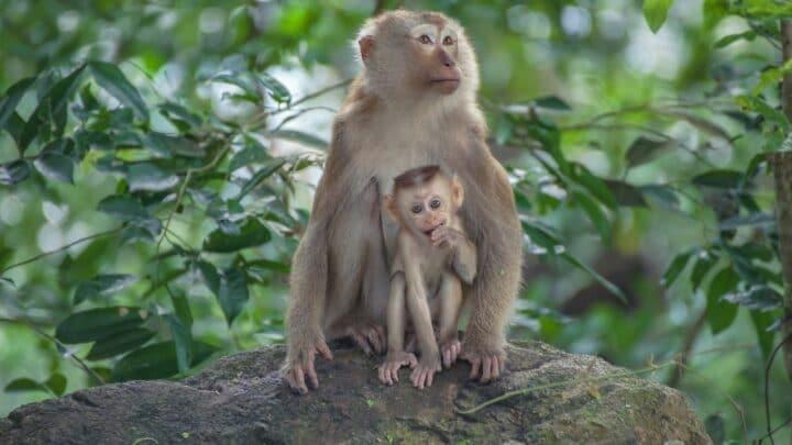 How Long Monkeys Live — That is Interesting!