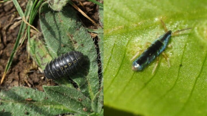 What to Feed Springtails and Isopods – Animals? Plants? Both?