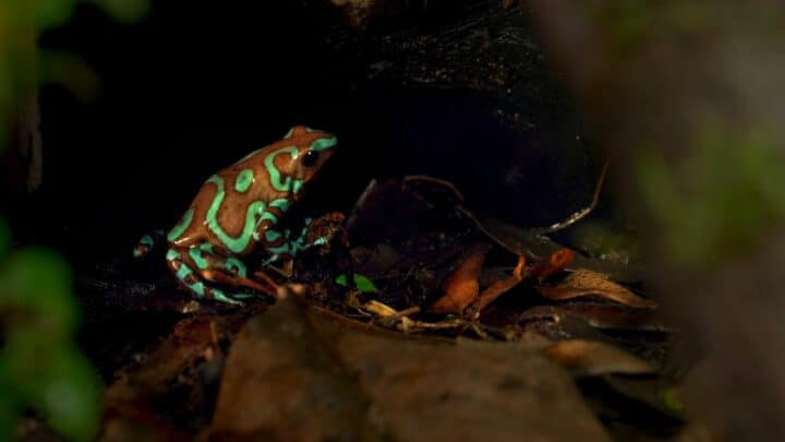 What Colors Frogs Are — Amazing!