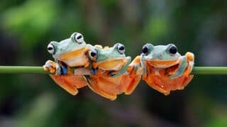 What Frogs Symbolize