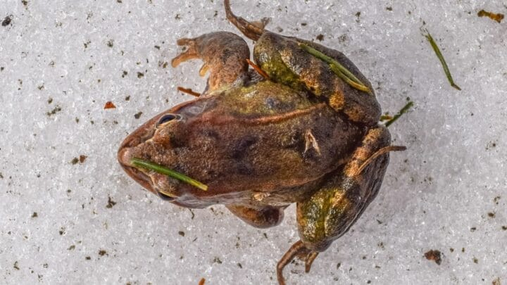 Where Frogs Go in the Winter — Do You Know?