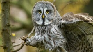 Why Do Owls Have Short Legs