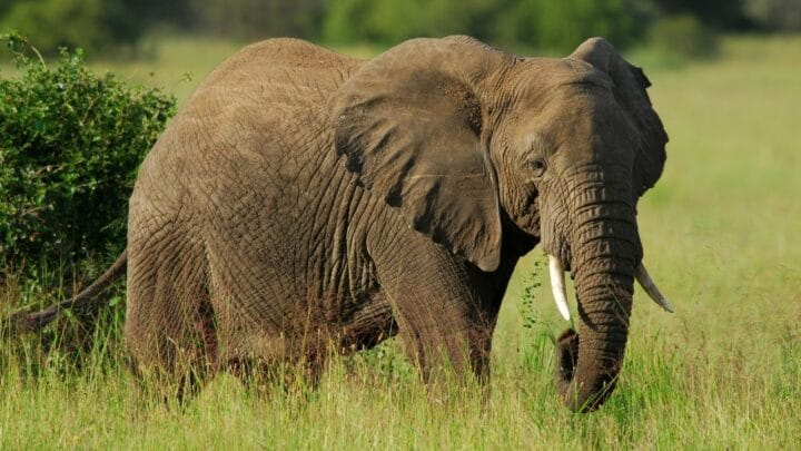 Why Don't Elephants Have Balls? Really? Here's Why!