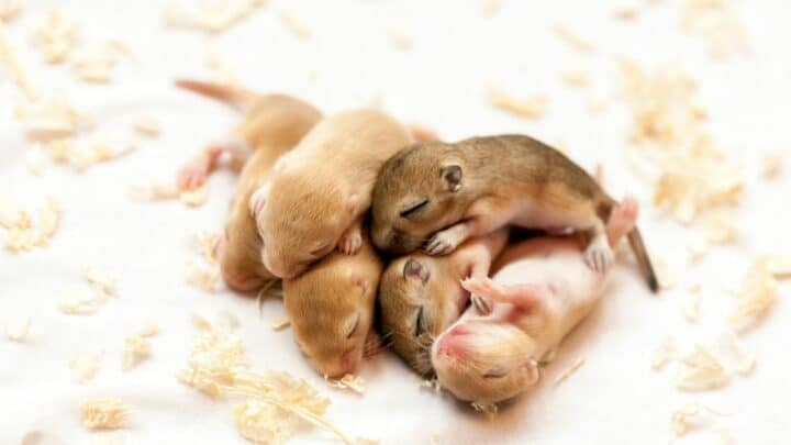 Why Some People Think Mice Are Cute — I See Now!