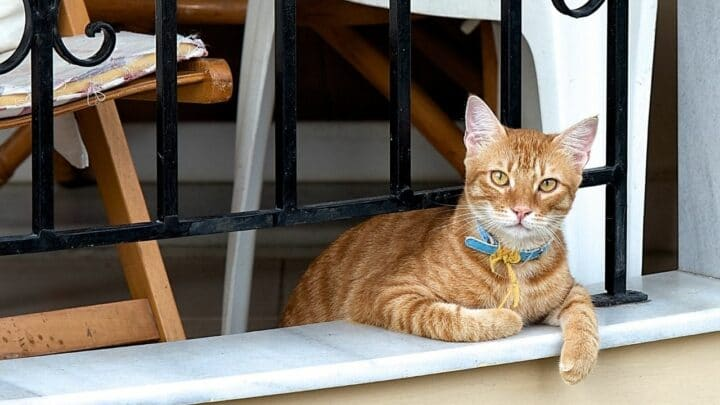 How to Let a Cat In and Out When Living in an Upstairs Apartment