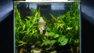 What Animal Can be Kept in a Tank Just Under 3 Gallons