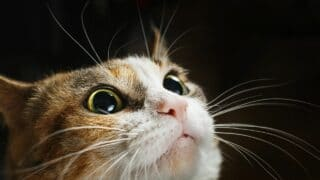 What To Do When a Cat is in Attack Mode