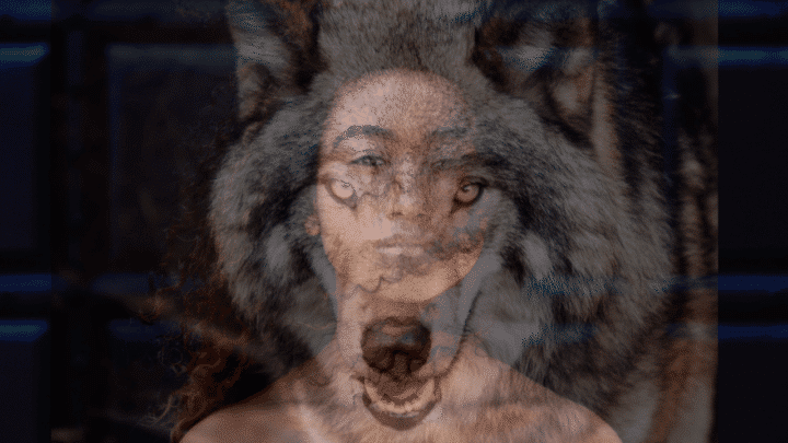 Wolf Compared to Human – How Similar Are We?